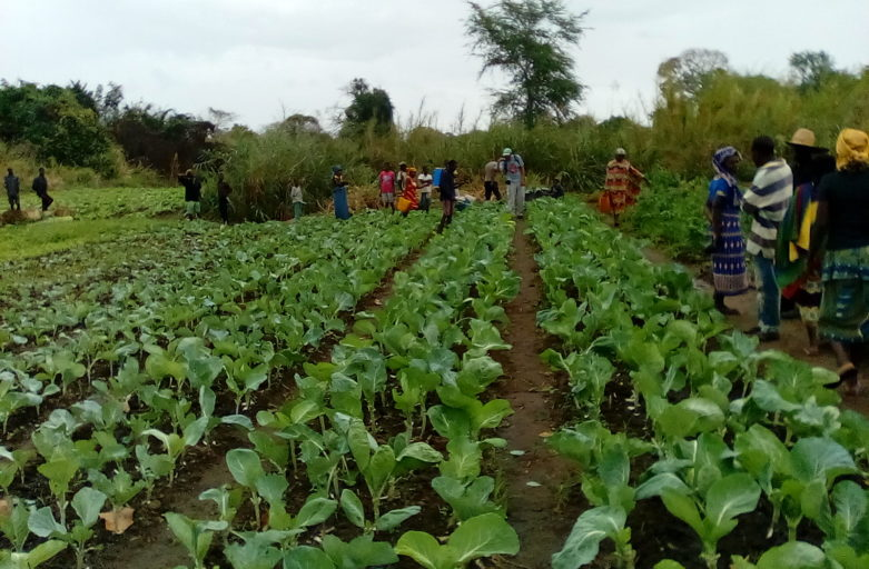 Combating Climate Change – by ADPP Mozambique