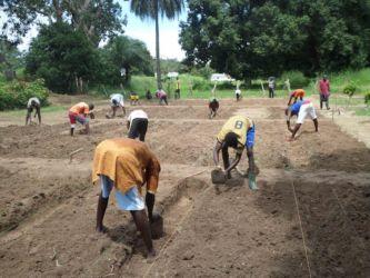 guine-bissau-agricultura-adpp-1
