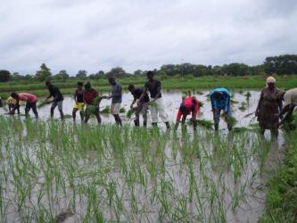 guine-bissau-agricultura-adpp-2