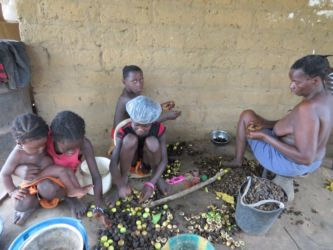 guine-bissau-agricultura-adpp-8